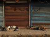 Laborer and a Stray Dog Sleep on a Pavement Early Morning in the Old Part of New Delhi, India Photographic Print