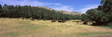American Bison Grazing on Landscape, South Dakota Highway 87, Custer State Park, South Dakota Photographic Print by  Panoramic Images