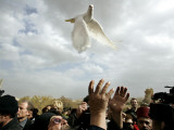 Greek Orthodox Priest Releases a Dove During a Traditional Ceremony at Jordan River Baptismal Site Photographic Print