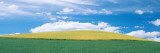 Crop in a Field, Whitman County, Washington State, USA Photographic Print by  Panoramic Images