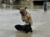Dog Jumps over Another in Flooded Embankment Road of River Danube in Downtown Budapest, Hungary Photographic Print