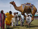 Pakistan Folk Dancers Perform; Owner Sits with His Camel, Annual Festival Horse and Cattle Show Photographic Print