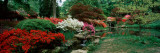Azaleas in a Garden, Exbury Gardens, New Forest, Hampshire, England Photographic Print by  Panoramic Images