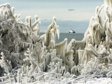 US Coast Guard Icebreaker Along the Shore of Lake Erie as Ducks Fly Overhead Photographic Print