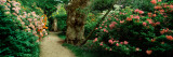 Isabella Plantation in a Park, Richmond Park, London, England Photographic Print by  Panoramic Images