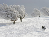 Strollers Passing Snow Covered Trees on the Mountain Schauinsland in the Black Forest , Germany Photographic Print