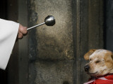 Blessing a Dog During the Feast of San Anton, the Patron Saint of Animals, in Madrid Photographic Print