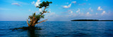 Tree in the Sea, Ten Thousand Islands, Florida, USA Photographic Print by  Panoramic Images