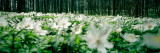 Wildflowers in a Forest Photographic Print by  Panoramic Images