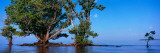 Trees in the Sea, Ten Thousand Islands, Florida, USA Photographic Print by  Panoramic Images