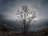 Tree Rises Above the Noravank Canyon in Southern Armenia Photographic Print