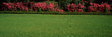 Azaleas in a Park, Charleston, Charleston County, South Carolina, USA Photographic Print by  Panoramic Images