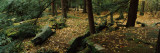 Trees in a Forest, Bilger's Rocks, Grampian, Clearfield County, Pennsylvania, USA Photographic Print by  Panoramic Images