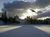 Pigeon Flies over a Frozen Pond Outside Novodevichi in Moscow Photographic Print