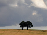 Two Trees Stand on a Field in Front of a Cloudy Sky Near Sebnitz, Eastern Germany Photographic Print