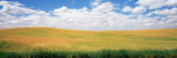 Wheat Crop in a Field, Palouse, Whitman County, Washington State, USA Photographic Print by  Panoramic Images