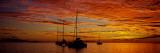 Sailboats in the Sea, Tahiti, French Polynesia Fotografisk trykk av Panoramic Images,