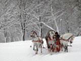 Man Rides a Sleigh Carrying Tourists in Park on a Bank of Moskva River at Outskirts of Moscow Impressão fotográfica