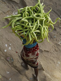 Indian Farmer Carries Cucumbers to Sell in the Market on the Outskirts of Allahabad, India Photographic Print