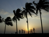 Village Boy Climbs a Coconut Tree as Others Wait Below on the Outskirts of Bhubaneshwar, India Photographic Print