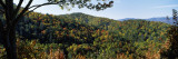 View of a Forest, Cataloochee, Great Smoky Mountains National Park, North Carolina, USA Photographic Print by  Panoramic Images
