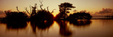 Silhouette of Trees at Sunset, Oyster Bar, Pine Island, Hernando County, Florida, USA Photographic Print by  Panoramic Images