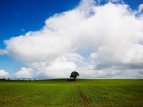 Oak Tree in Arable Field, Near Carlow, Co Carlow, Ireland Photographic Print