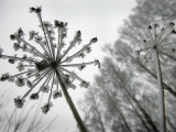 Dried Plants and Trees Covered with Hoarfrost are Seen in a Forest Near Village Veragi, Belarus Photographic Print