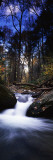 River Flowing Through a Forest, Delaware Water Gap National Recreation Area, New Jersey, USA Photographic Print by  Panoramic Images