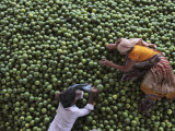 Workers Rest on a Pile of Lime at a Wholesale Fruit Market in Hyderabad, India Photographic Print