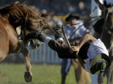 Uruguayan Gaucho, or Cowboy, Falls from a Horse During a Rodeo in Montevideo Photographic Print
