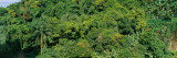 View of Trees in a Forest, Atlantic Forest, Rio De Janeiro, Brazil Photographic Print by  Panoramic Images
