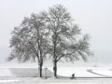 Cyclist Passes a Tree Covered with Snow, Southern Germany Photographic Print
