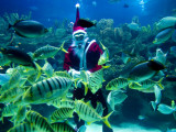 Diver Dressed as Santa Claus Feeds Fish as Part of Christmas Celebrations, Aquarium in Kuala Lumpur Photographic Print
