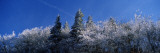 Frost on Trees, Great Smoky Mountains National Park, Tennessee, USA Photographic Print by  Panoramic Images