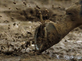 Horse Runs Through the Mud at Churchill Downs in Louisville, Kentucky Photographic Print