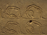 Petroglyphs on a Wall, Luxor, Karnak, Egypt Photographic Print