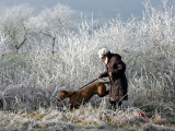 Beate Pittscheidt Walks Her Dog in the Hoar Frosted Surroundings of Kronenburg, Germany Photographic Print