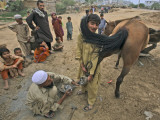 Pakistan Youth, Holds a Horse's Hoof While a Man Prepares to Place a New Shoe Photographic Print