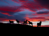 Silhouette of Horses at Night, Iceland Stampa fotografica