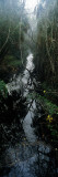 Stream Passing Through a Forest, Oscar Scherer State Park, Osprey, Sarasota County, Florida, USA Photographic Print by  Panoramic Images