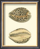 Leopard Cowry Shells Prints by George Shaw