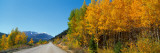 Aspen Trees Along a Road, Rock Creek Road, California, USA Photographic Print by  Panoramic Images