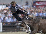 Gaucho, or Cowboy, is Thrown from a Horse as He Competes in a Rodeo in Montevideo Photographic Print