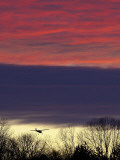 Plane is Seen over the Tree Tops While on its Approach for Landing, a Little Past Sun Down Photographic Print
