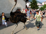 Running with an Ostrich in the Streets of Northern Spain, Imitating the Famous Running of the Bulls Photographic Print