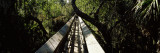 Canopy Walkway in a Forest, Myakka River State Park, Sarasota, Sarasota County, Florida, USA Photographic Print by  Panoramic Images
