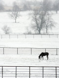 Turned Against a Gusting North Wind, a Horse Grazes in a Pasture Just North of Tulsa, Oklahoma Photographic Print