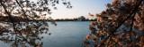 Cherry Blossom with Memorial in Jefferson Background, Tidal Basin, Potomac River, Washington DC Photographic Print by Panoramic Images