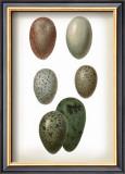 Bird Egg Study VI Prints